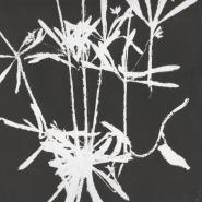 amandahopkins, sticky weed , monoprint 2017