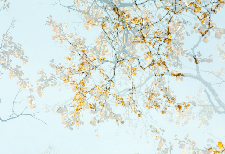 Arborescence 2( 2 of 5) limited edition photograph 50x74cm £500 unframed