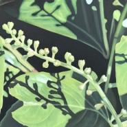 002: Flowering laurel (oil on linen board), 50 x 40cm, framed, £525