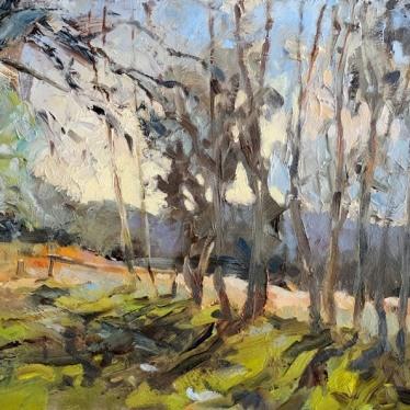 003: Tree shadows at lone oak (oil), 23 x 30cm, £400