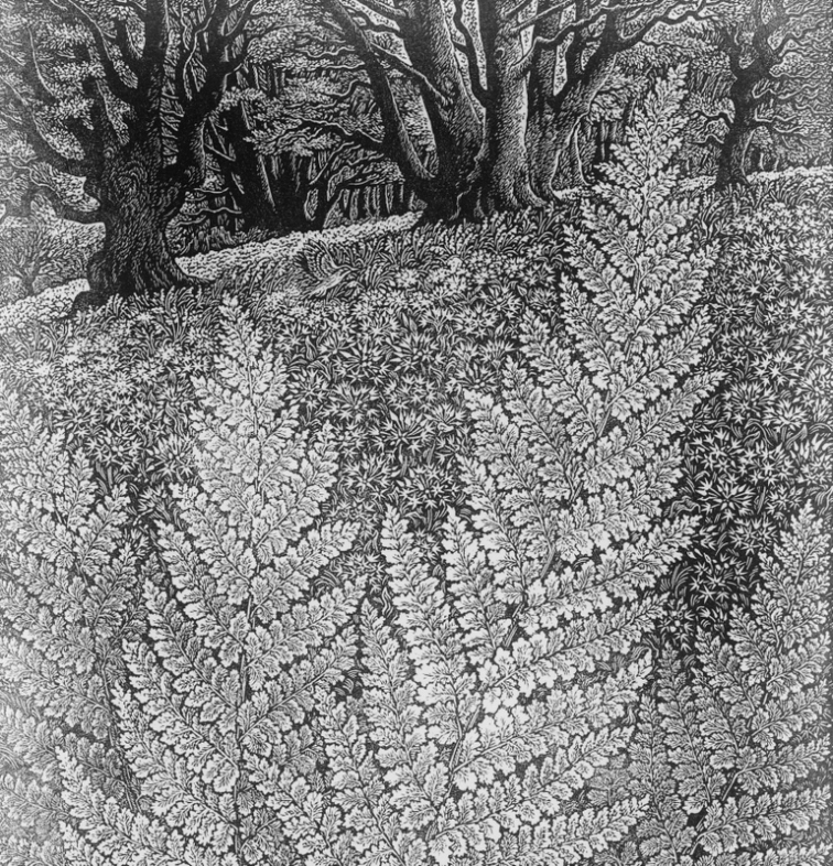 Scullard Into the Woods wood engraving 115x140mm £95