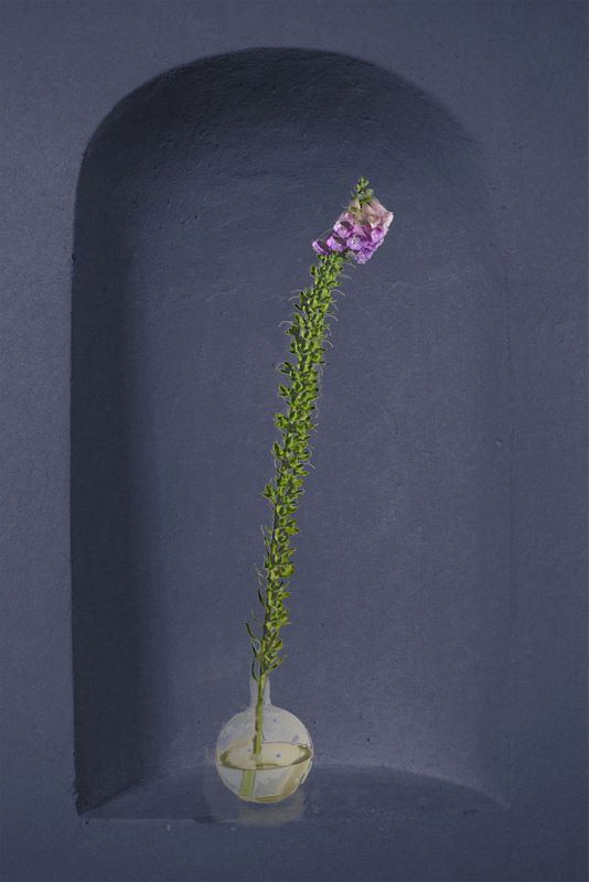 Shelley Rose_Beauty in Isolation_Foxglove_70x55cm_£750 framed (Primary image)