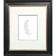005: Bracken I (graphite), 62 x 50cm, framed, £995