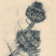 004: Artichokel, edition 4 of 20 (drypoint), 142 x 208mm, unframed, £105