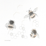 002: Buff tailed bumble bee 3.28 se (graphite and gold powder), 34 x 30cm, framed, £295