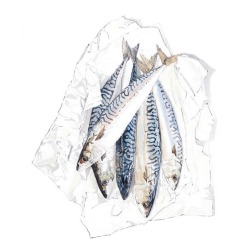 005: Mackerel (watercolour and ink), 68 x 86cm, framed, £1850