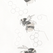 004: Buff tailed BumbleBee 3.32e (graphite & gold powder) 41x30 cm, framed, £295