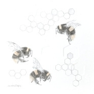002: Buff tailed BumbleBee 3.34se (graphite & gold powder) 34x30 cm, framed, £295