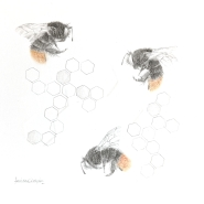 SOLD: Red tailed BumbleBee 3.35se (graphite & gold powder) 34x30 cm, framed, £295